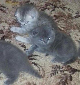 Котята.2 девочки.