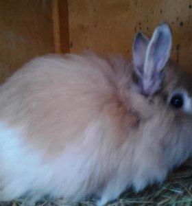 Кролик декоративный пуховый