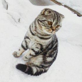 Вязка! Кот для кошечки!