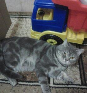 Кот.вязка