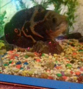 Рыбок и тритонов