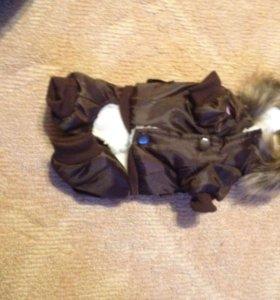 Одежда для собаки мелкой породы