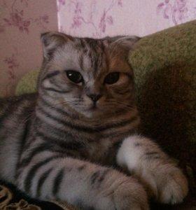 Кошка на вязку