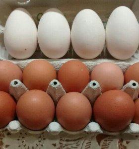 Куриное, утиное  яйцо