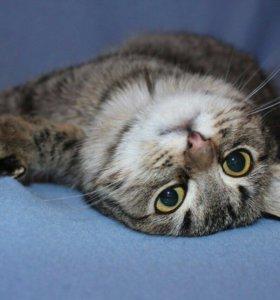 Котенок в добрые руки,котик в дар Сержик
