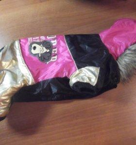 Комбинезон для маленькой собачки + носочки в дар