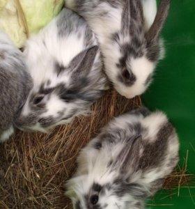 Кролики уличные
