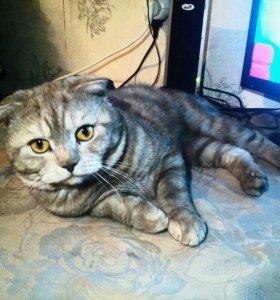 Вязка с котом в ульяновске