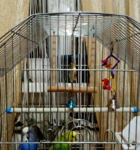 Попугаи + клетка