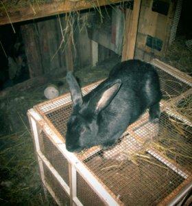 Кролики 89806849376