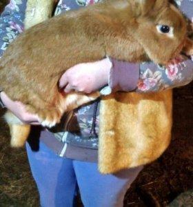 Кролики Н/З