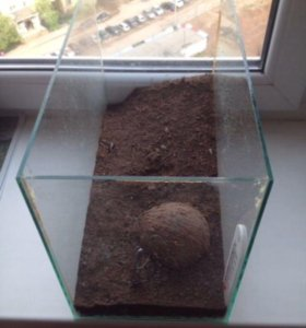 Террариум из аквариума