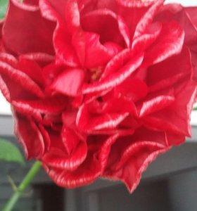 Цветы для офиса, дома и зимнего сада