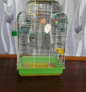 Волнистые попугаи( не ручные)