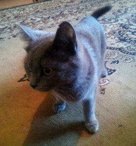 Кошка для вязки