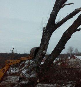 Валка леса Спил деревьев