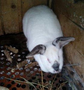 Продам взрослых кроликов-самок