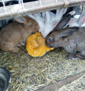 Кролики на развод