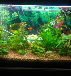 Растения рыбки