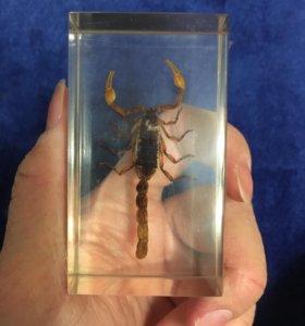 Скорпион в стекле