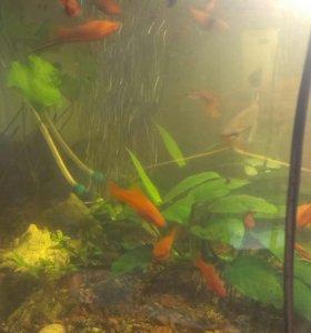 Аквариумные рыбки и растения