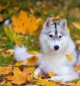 Гуляю с собаками)))