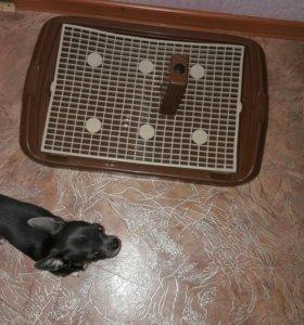 Лоток для мелких пород собак