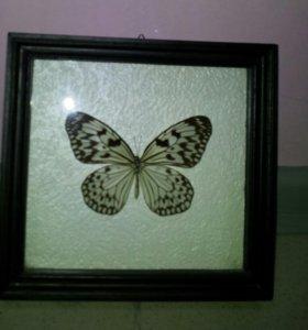Коллажи из бабочек