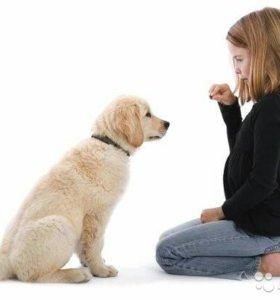 Воспитание  щенков + курс угс
