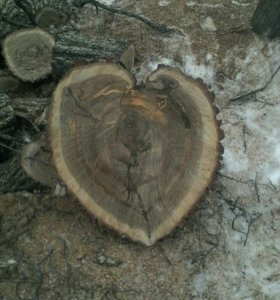 Удаление деревьев, .пней