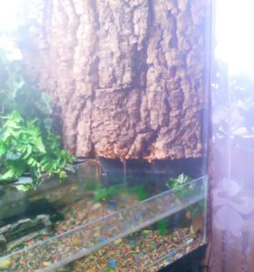 Террариум-аквариум