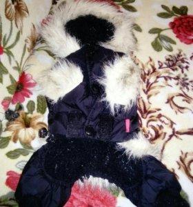 Зимний комбинезон для маленькой собачки