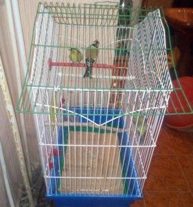 Птицы с клеткой