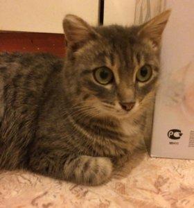 Кошечка ищет свой дом