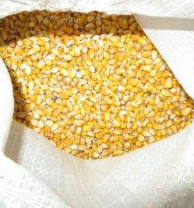 Кукуруза для животных