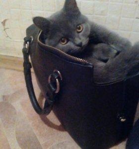 Продам кошку