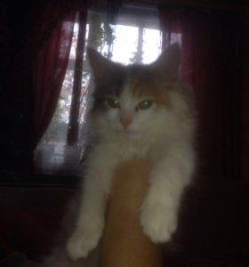 Кошечка, номер тел. 8-937-715-55-14