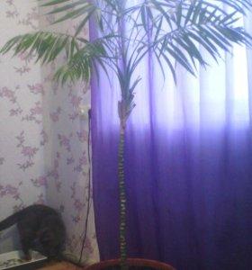 Пальма 130 см