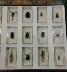 Коллекция насекомых всего 49