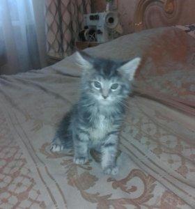 Подарки к  празнику  котята  мей-кун