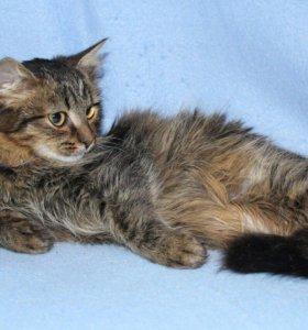 Котёнок в добрые руки,котик в дар Пушик
