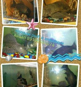 Рыбы и аквариум