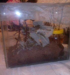 Палачники месте с аквариумом