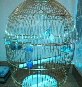 Попугай +клетка