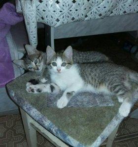 Котята ищут дом, уют и ласку