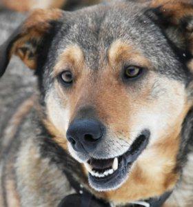 Супер собака-позитив Андора в дар.