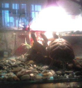 Аква террариум с черепахами.