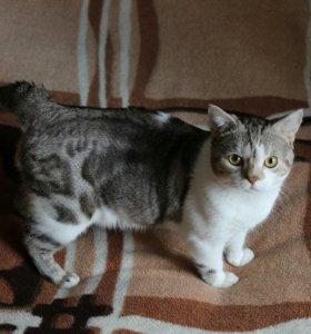 Вязка с котом редкого окраса