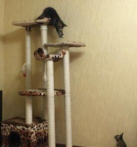 Домик для кошек.Изготовим на заказ