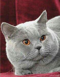 Клубный котик ждет невест